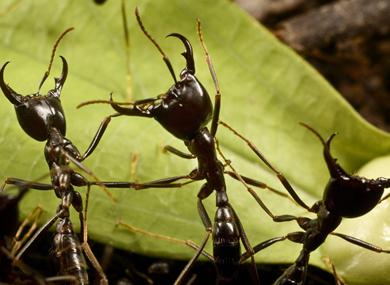 Ant Control George Tel 061 293 6998 George The George Pest