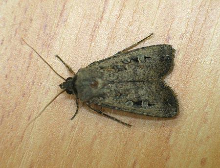 Moth Control Brooklyn Tel 061 293 6998 Cape Town The